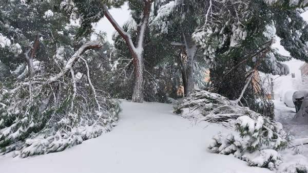 ¿Qué daños causados por la nevada puedo reclamar?