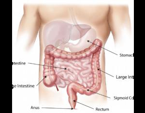abdomen-1698565_1280